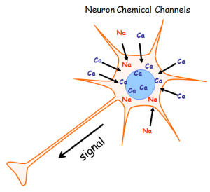 SteadyPD 3 Neuron